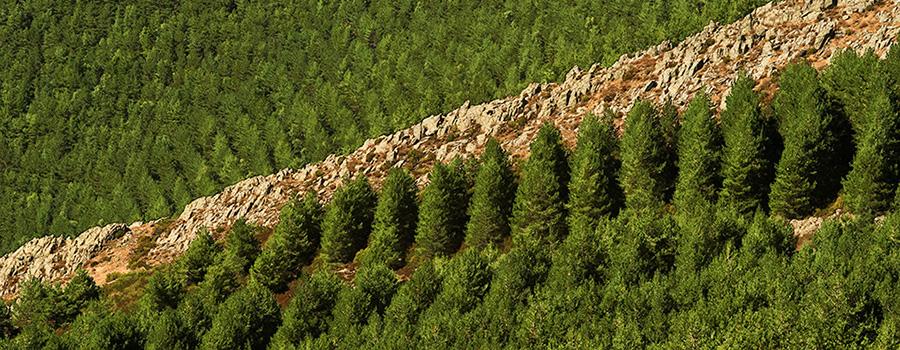 Repoblación forestal en la Sierra del Rincón. Reserva de la Biosfera